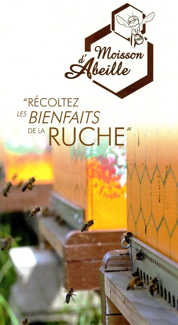 Moisson d'abeille à Rosheim